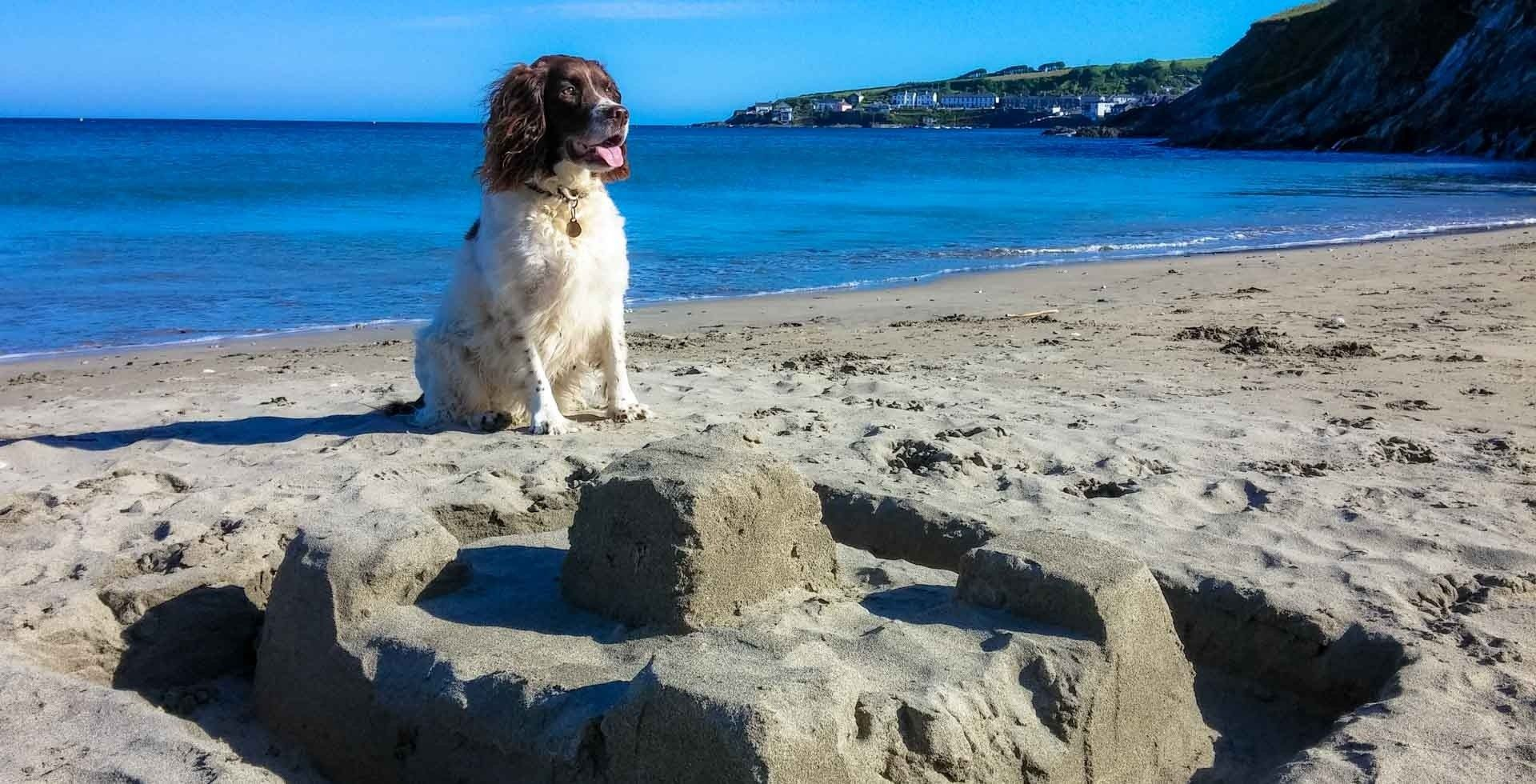 Harlyn Bay Dog Friendly Cottages
